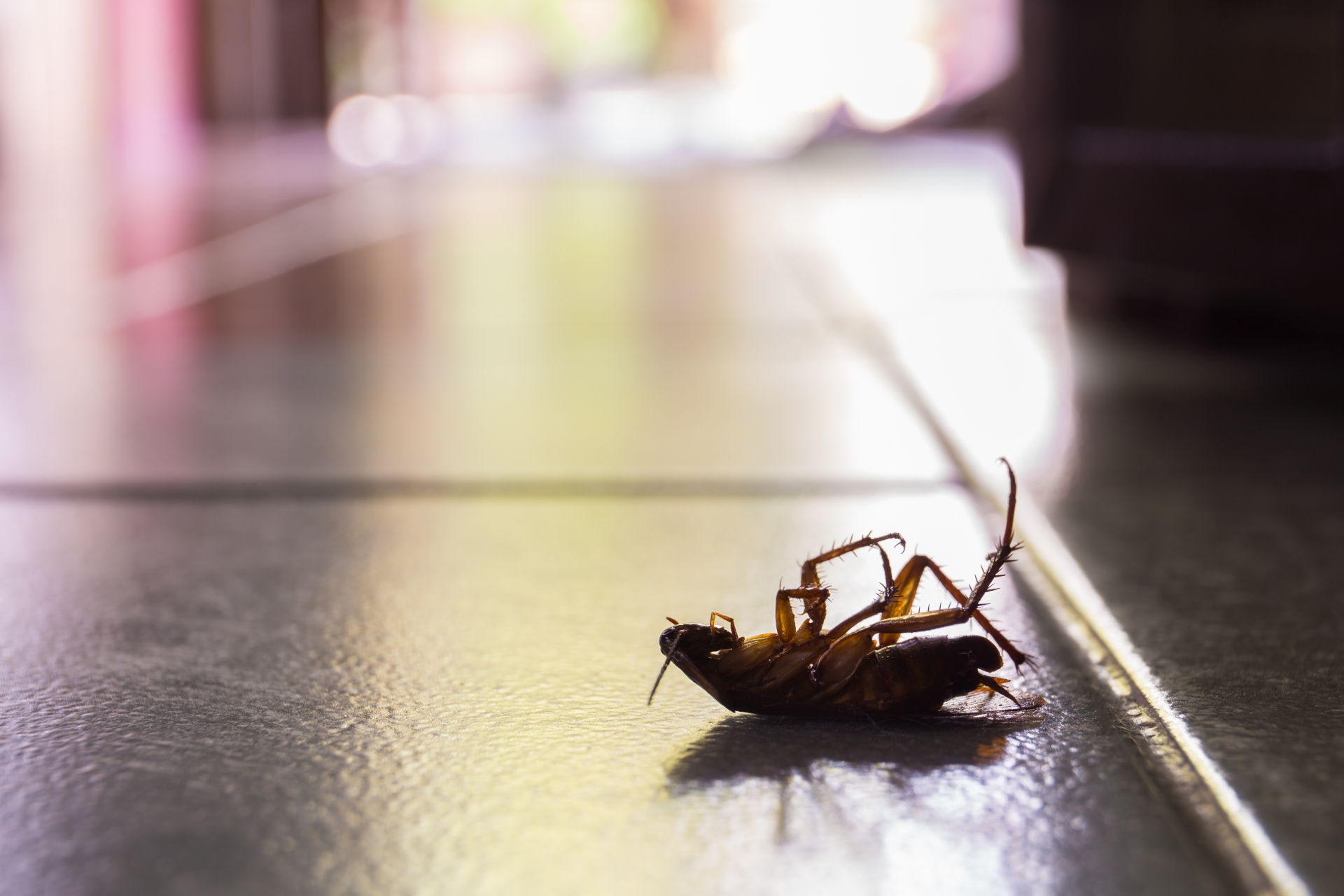 Cockroach Control, Pest Control in New Cross, New Cross Gate, SE14. Call Now 020 8166 9746